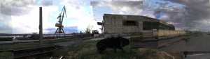 Severin  1 cu caine negru